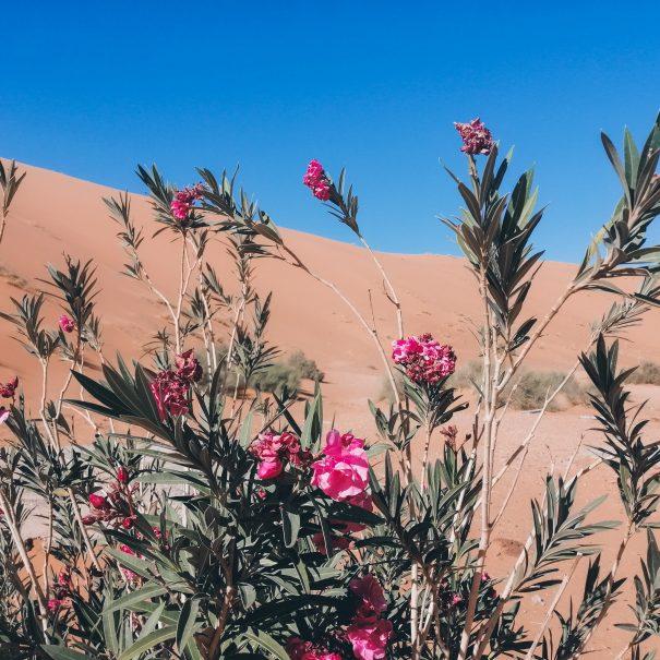 3-day Marrakech to Fez Sahara Desert Tour